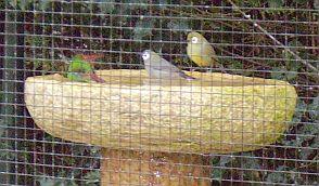 brilvogels-badderen