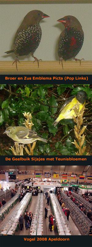 emblemapicta-geelbuiksijs-vogel2008