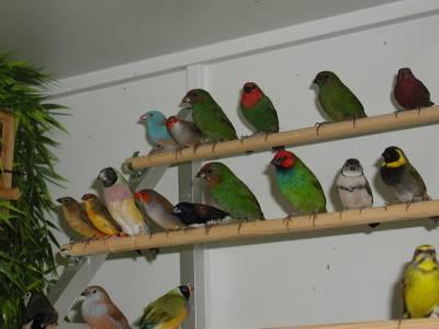 mijnvogels