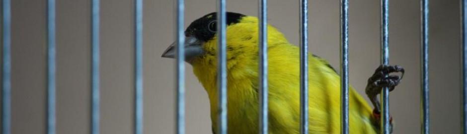 Paul's Birds